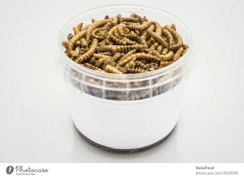 essbare Mehlwürmer isoliert hohe Qualität Schalen & Schüsseln Design schön Frau Erwachsene Natur Tier Haustier Vogel Käfer Wurm lecker braun weiß Tiere