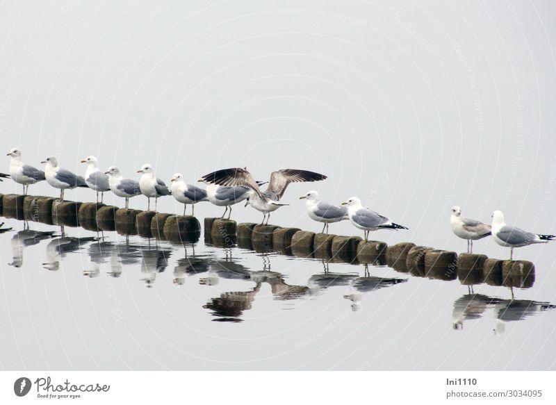 Möwen Reihe Natur blau weiß Tier Strand schwarz Küste Vogel braun grau Nebel Wildtier Tiergruppe warten Flügel Seeufer
