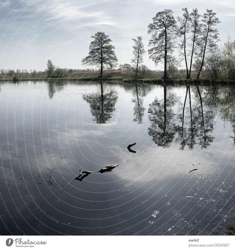 Der Stand der Dinge Umwelt Natur Landschaft Pflanze Luft Wasser Himmel Wolken Horizont Frühling Schönes Wetter Baum Gras Sträucher Seeufer stehen Wachstum