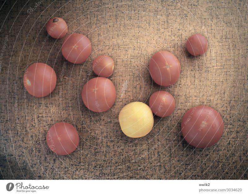 Tarnung aufgeflogen Sommer Gemüse Tomate Küchentisch Tischplatte liegen Gesundheit Zusammensein glänzend rund saftig viele gelb rot Störenfried Fremdkörper
