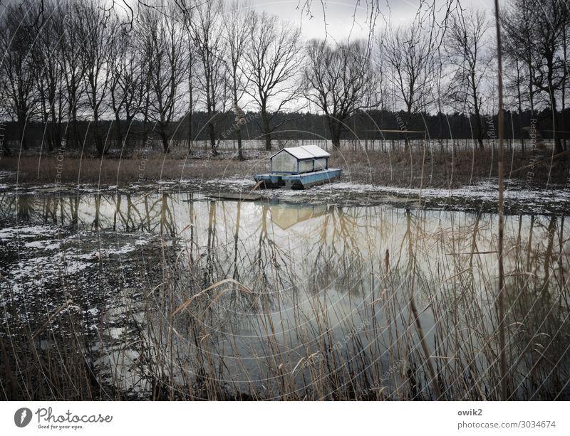 Regen, bitte Umwelt Natur Landschaft Pflanze Wasser Wolken schlechtes Wetter Baum Sträucher Küste Seeufer Teich geduldig Traurigkeit Sehnsucht Erwartung