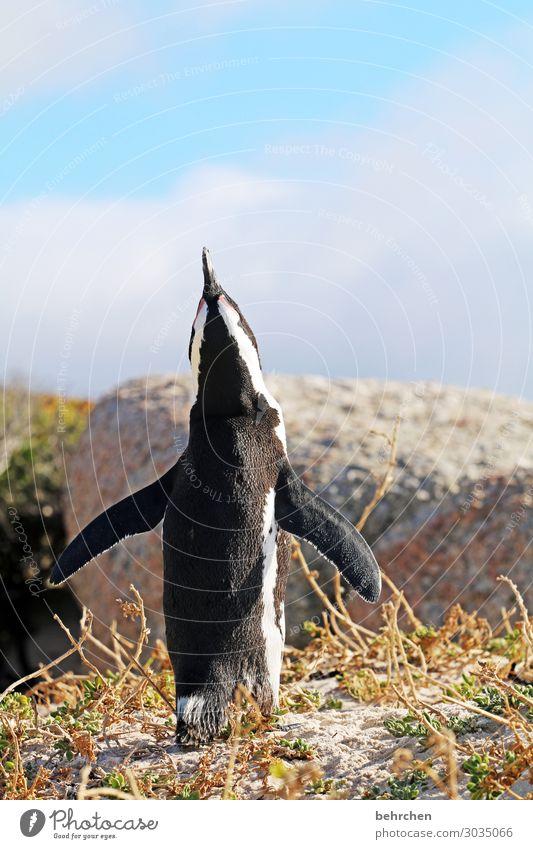 vorfreude | bald darf ich ... Ferien & Urlaub & Reisen Tourismus Ausflug Abenteuer Ferne Freiheit Natur Strand Küste Wolken Himmel Wasser Landschaft Meer