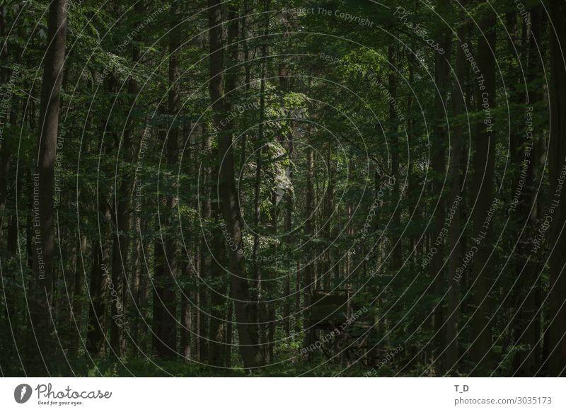 Wald mit Hochsitz Natur alt Pflanze grün Baum Erholung Gesundheit Leben Umwelt natürlich Tourismus Zufriedenheit wild wandern ästhetisch