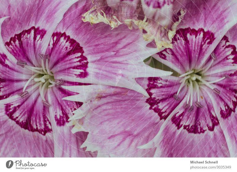 Flower-Power-Blüten Umwelt Natur Pflanze Blume Kitsch Fröhlichkeit Zufriedenheit einzigartig knallig Flowerpower Farbfoto mehrfarbig Nahaufnahme Makroaufnahme
