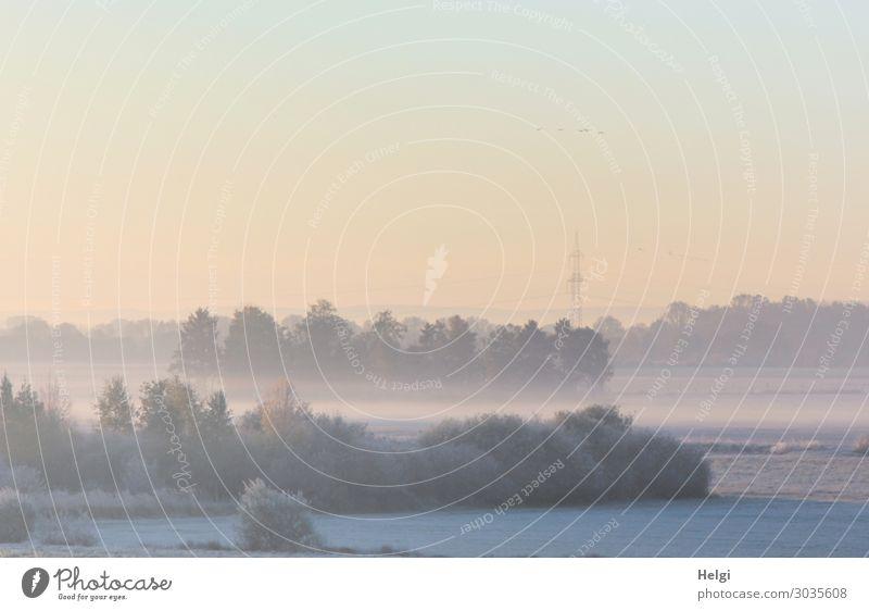 Landschaft mit Morgennebel und diffusem Sonnenlicht im Moor Instant-Messaging Umwelt Natur Pflanze Himmel Herbst Nebel Baum Sträucher Wiese Sumpf stehen