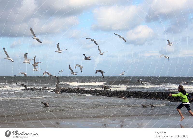 Die Möwen vertreiben Kind Ferien & Urlaub & Reisen Natur Jugendliche blau grün Meer Freude Ferne Strand Leben Gefühle Junge Freiheit grau Körper