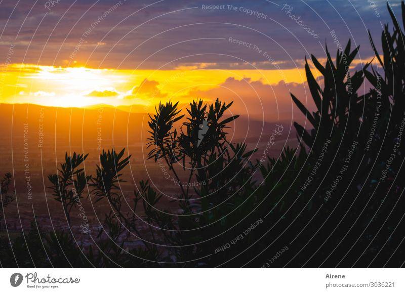 ein besonderer Sonnenuntergang Ferne Landschaft Himmel Nachthimmel Sonnenaufgang Blatt Grünpflanze Oleander Tal Toskana dunkel Unendlichkeit schön Klischee gold