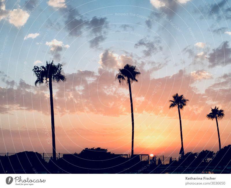Palmen Sonnenuntergang Umwelt Natur Himmel Sonnenaufgang Sonnenlicht Frühling Sommer Herbst Winter Wetter Schönes Wetter maritim blau gelb grün orange rot