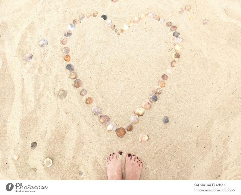 Herz Muscheln Sand Strand Natur Sommer Liebe Frühling Gefühle Fuß Zeichen Sommerurlaub Vertrauen Sandstrand Symbiose Herzmuschel