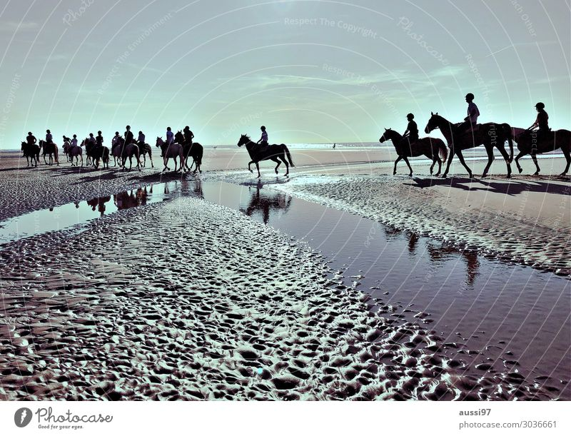 Les chevaux Ferien & Urlaub & Reisen Erholung Strand Menschengruppe Tiergruppe Pferd Wattenmeer Abendsonne Reiter Schimmel Ausritt Priel