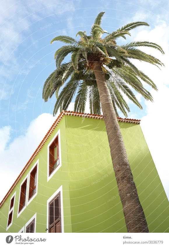 Kokosnuss zum Frühstück Himmel Wolken Schönes Wetter Pflanze Baum Palme Haus Freundlichkeit Fröhlichkeit hell hoch blau grün Zusammensein Leben standhaft