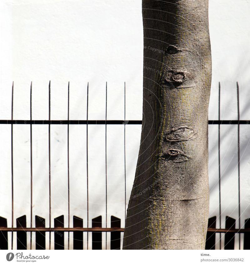 schon so viele jahre Pflanze Schönes Wetter Baumstamm Park Mauer Wand Zaun Strebe Holz Linie alt historisch nackt selbstbewußt Kraft Macht Sicherheit Schutz