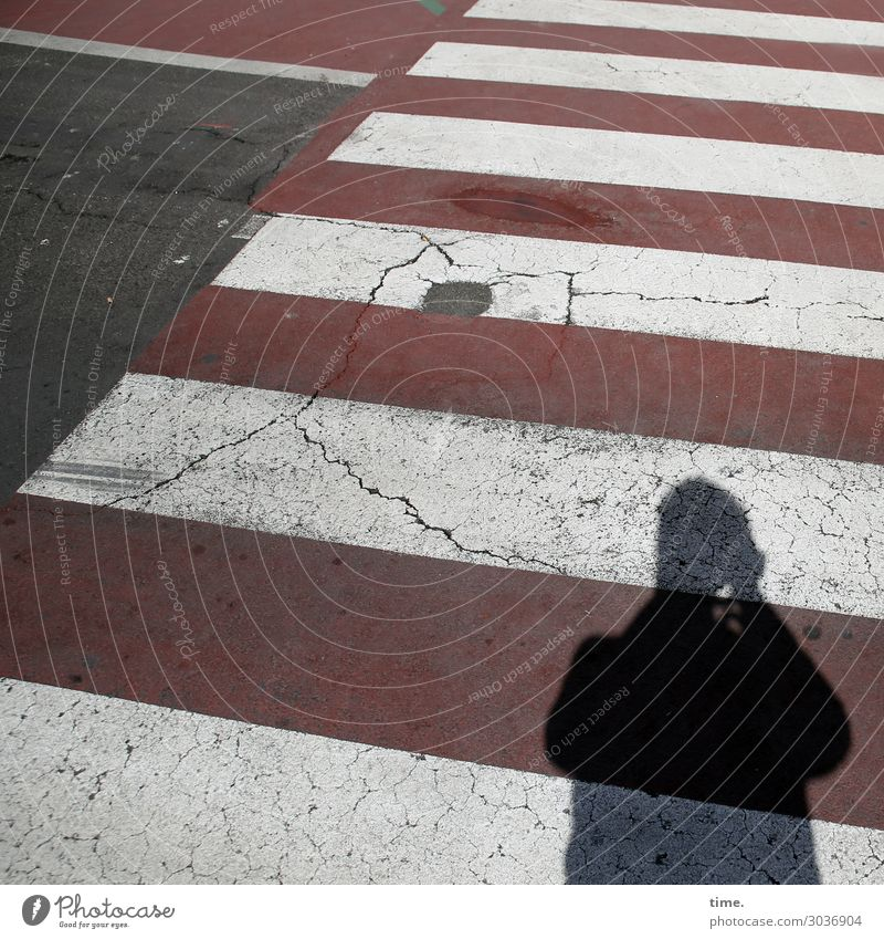 Zebras fotografieren | on the road again maskulin Mann Erwachsene 1 Mensch Verkehr Verkehrswege Fußgänger Straße Wege & Pfade Wegkreuzung Verkehrszeichen