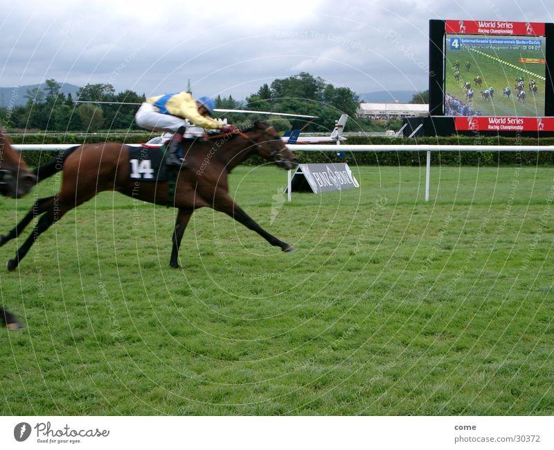 Nase vorn Sport Erfolg rennen Geschwindigkeit Pferd Sportveranstaltung Reitsport