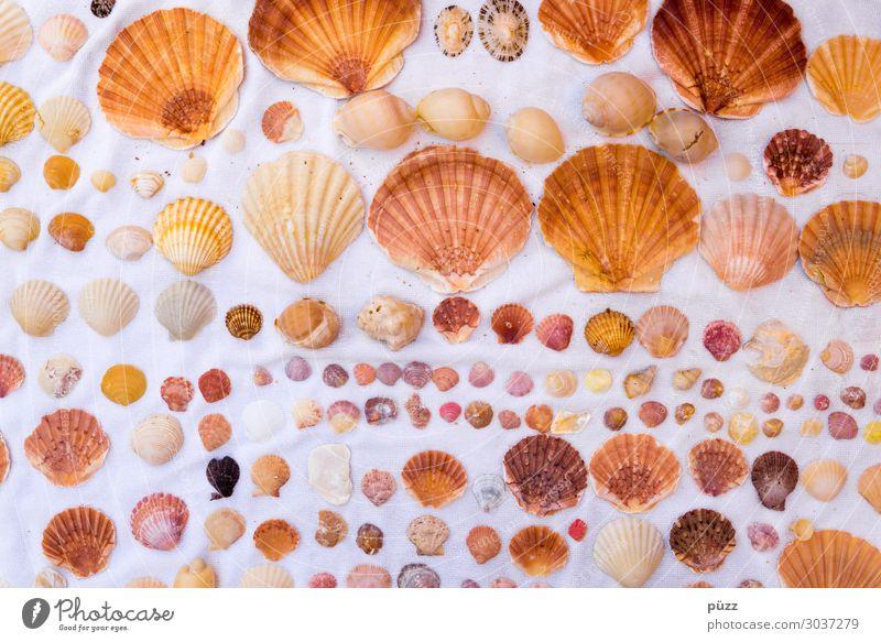 Muscheln Ferien & Urlaub & Reisen Natur Sommer Wasser weiß Meer Tier Strand gelb Umwelt Küste braun Dekoration & Verzierung Wildtier Sommerurlaub Sammlung