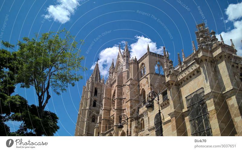 Santa María de León Ferien & Urlaub & Reisen Tourismus Sightseeing Städtereise Sommer Sommerurlaub Sonnenlicht Schönes Wetter Baum Spanien Kastilien und Leon