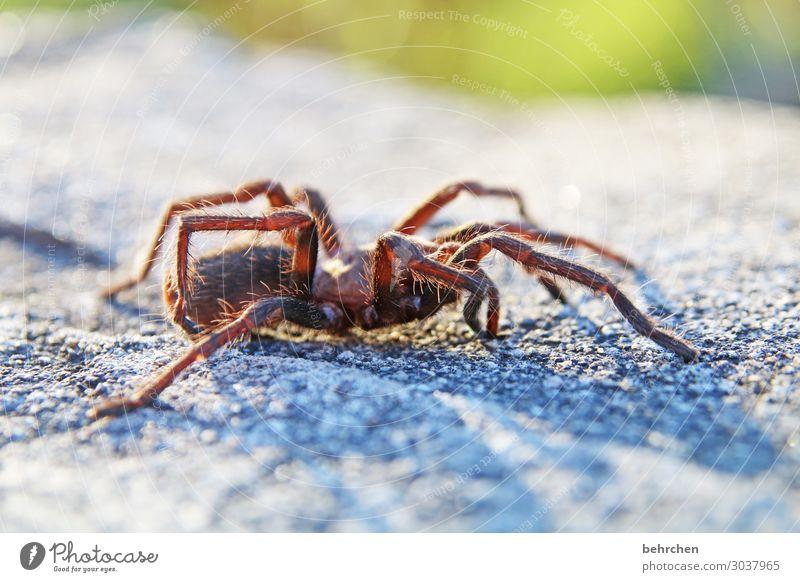HANDtellerGROSS Ferien & Urlaub & Reisen Tourismus Ausflug Abenteuer Ferne Freiheit Wildtier Spinne Beine 1 Tier außergewöhnlich exotisch fantastisch Angst