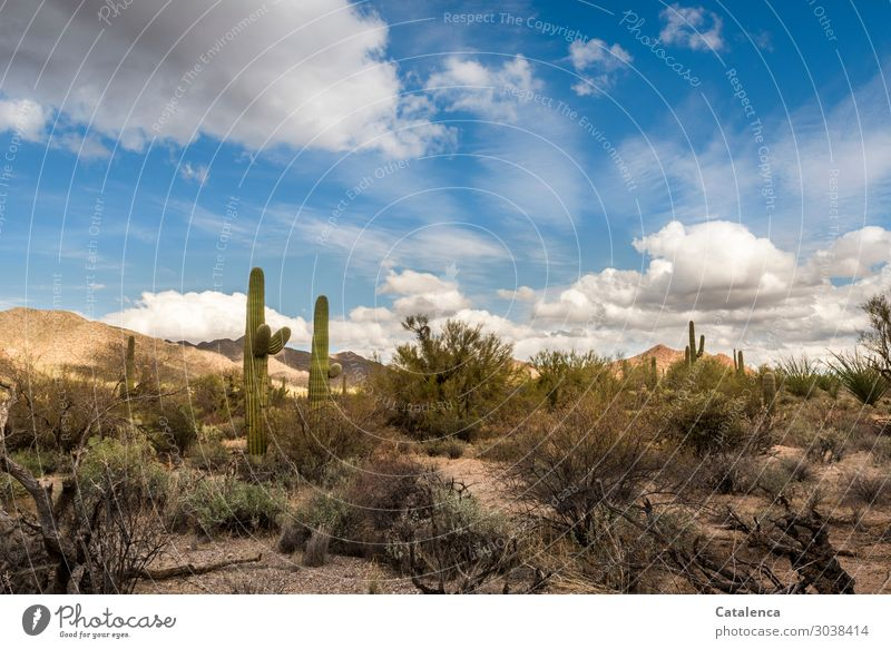 Wüste Himmel Natur Pflanze blau grün Landschaft Wolken ruhig Winter Umwelt braun Stimmung Erde Sträucher Schönes Wetter groß