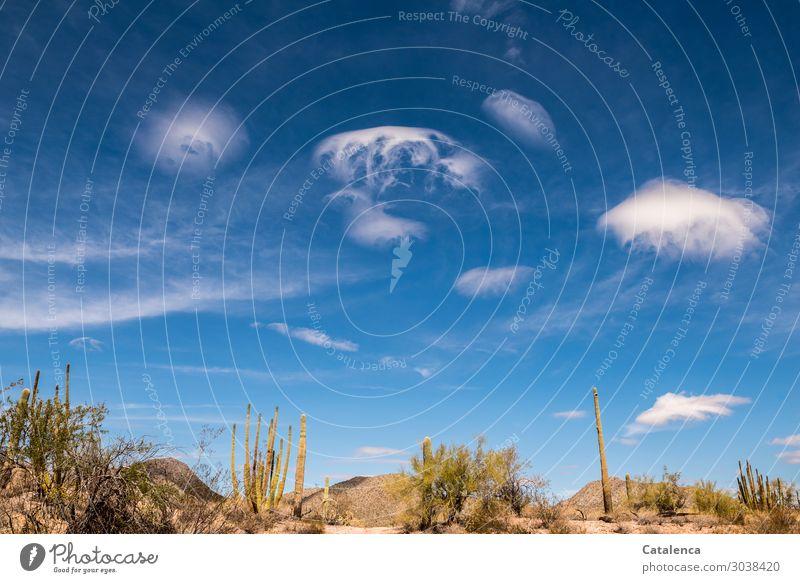 Luftig | Wolkenformationen Himmel Natur Pflanze blau grün Landschaft ruhig Umwelt außergewöhnlich braun Stimmung Erde Schönes Wetter Hügel