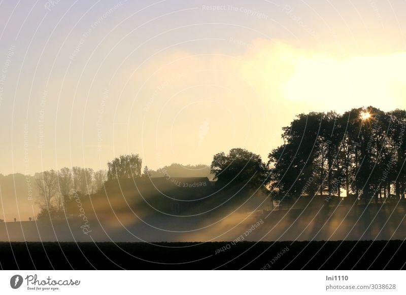 Morgennebel im Oktober Landschaft Sonnenaufgang Sonnenuntergang Herbst Schönes Wetter Nebel Baum Wiese Feld Hügel Stimmung ruhig Bauernhof Herbstbeginn