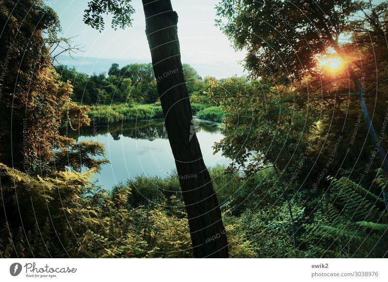 Sommer, draußen Umwelt Natur Landschaft Pflanze Himmel Wolken Horizont Sonne Schönes Wetter Baum Sträucher Grünpflanze Baumstamm Wald Teich See leuchten ruhig
