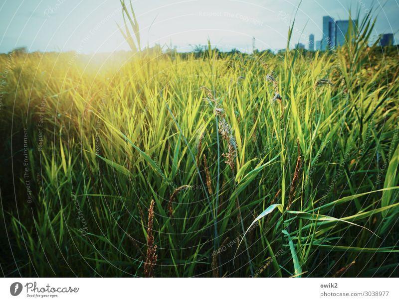 Wienerberg Umwelt Natur Landschaft Pflanze Wolkenloser Himmel Horizont Sonne Schönes Wetter Gras Grünpflanze Wildpflanze Schilfrohr Park See Erholungsgebiet