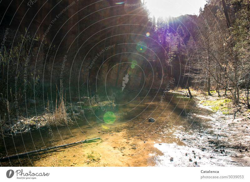 Im Licht baden Sommer Winter Berge u. Gebirge wandern Natur Landschaft Tier Erde Wasser Himmel Sonnenlicht Schönes Wetter Baum Gras Sträucher Wald Felsen Bach