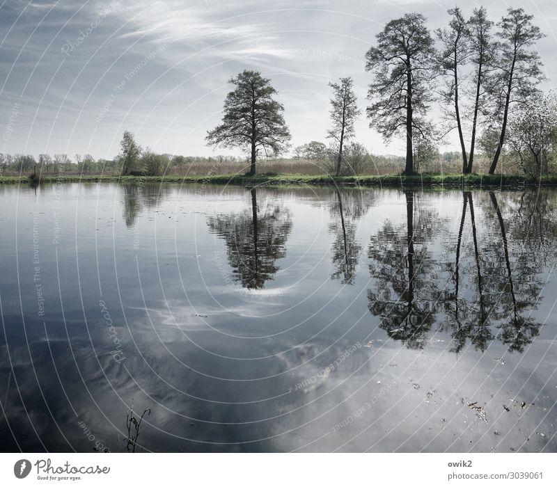 Wasserstand Umwelt Natur Landschaft Pflanze Himmel Wolken Horizont Frühling Schönes Wetter Baum Sträucher Wildpflanze Seeufer stehen Wachstum Zusammensein