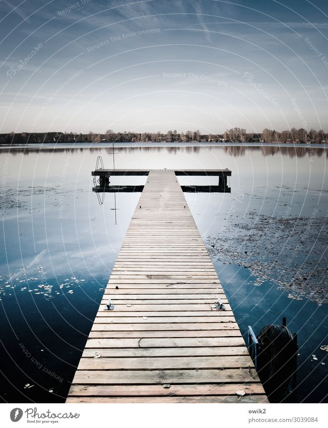 Anlauf Umwelt Natur Landschaft Wasser Wolkenloser Himmel Horizont Schönes Wetter Wasserpflanze Wald Seeufer Olba Lausitz Sachsen Deutschland Steg Holz einfach