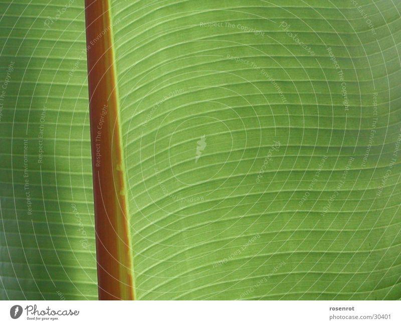 Bananenblatt grün Blatt Linie