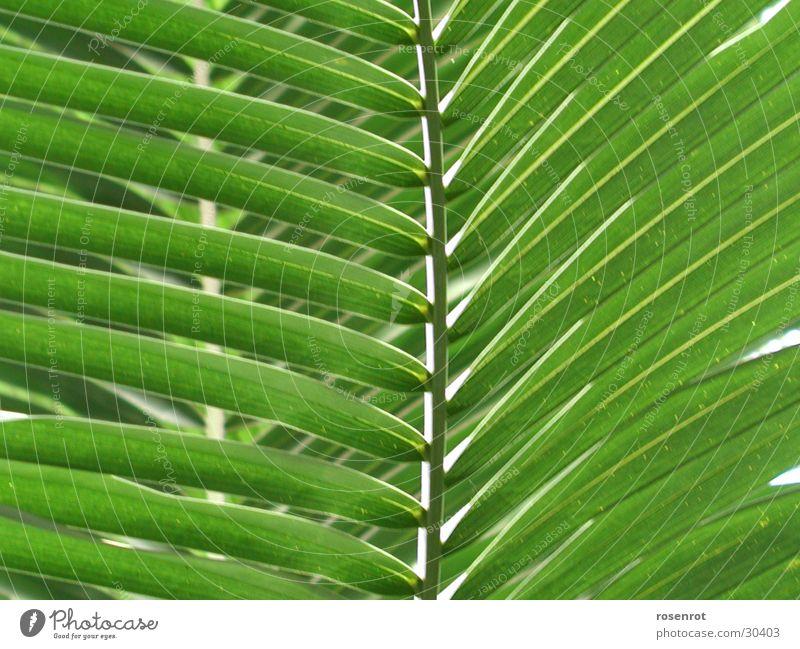 Blatt grün Blatt Fächer