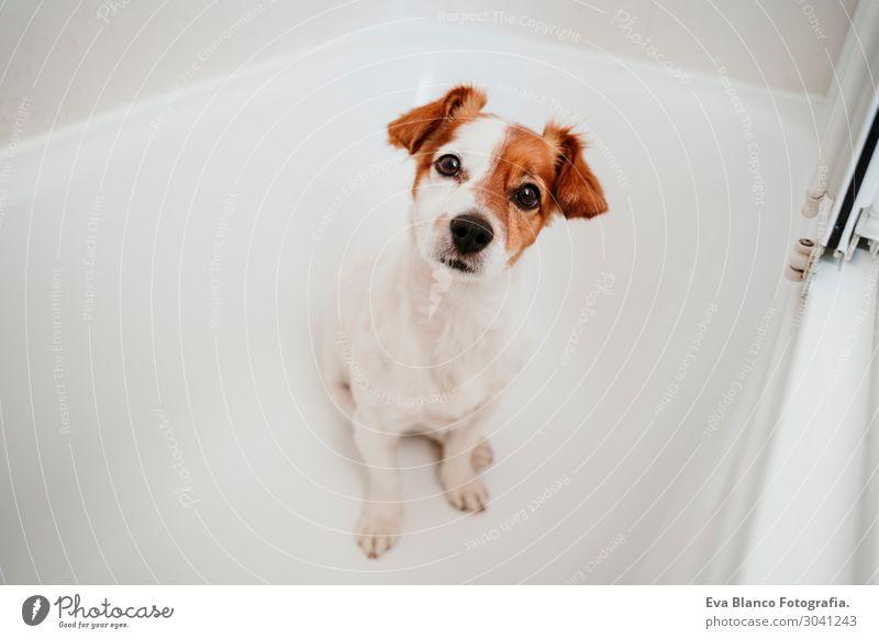 Hund Sommer schön weiß Haus Tier Freude Winter Gesundheit Lifestyle Herbst Liebe Frühling lustig Glück Gesundheitswesen