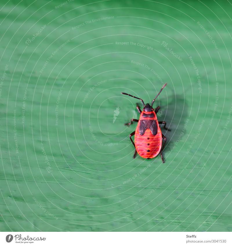 pin up Natur Sommer grün rot Tier Tierjunges Wärme natürlich Textfreiraum verrückt niedlich Insekt Holzbrett krabbeln Symmetrie Fühler