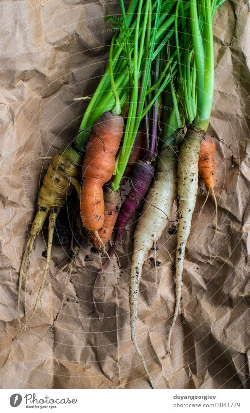 Karotten von einem kleinen Bio-Bauernhof. Gemüse Ernährung Vegetarische Ernährung Diät Garten Gartenarbeit Pflanze Erde Papier Wachstum dreckig frisch natürlich