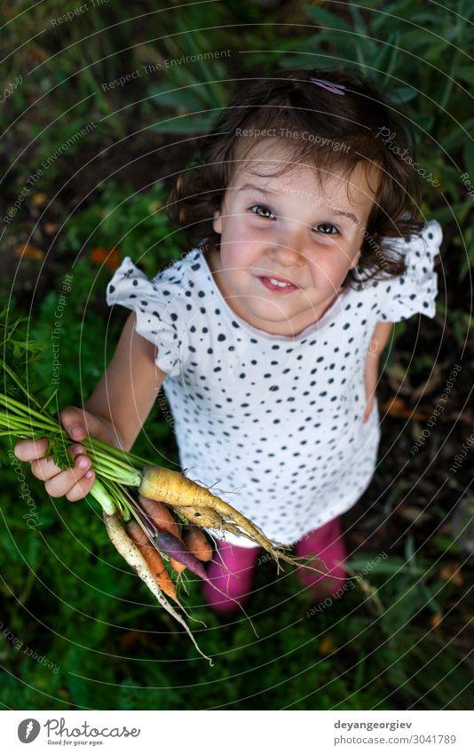 Karotten von einem kleinen Bio-Bauernhof. Ein kleiner Bauer hält Karotten. Gemüse Ernährung Vegetarische Ernährung Diät Garten Gartenarbeit Pflanze Erde