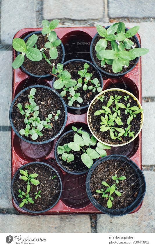 urban gardening tomaten und kräuter aufzucht Lebensmittel Gemüse Salat Salatbeilage Kräuter & Gewürze Ernährung Essen Picknick Bioprodukte