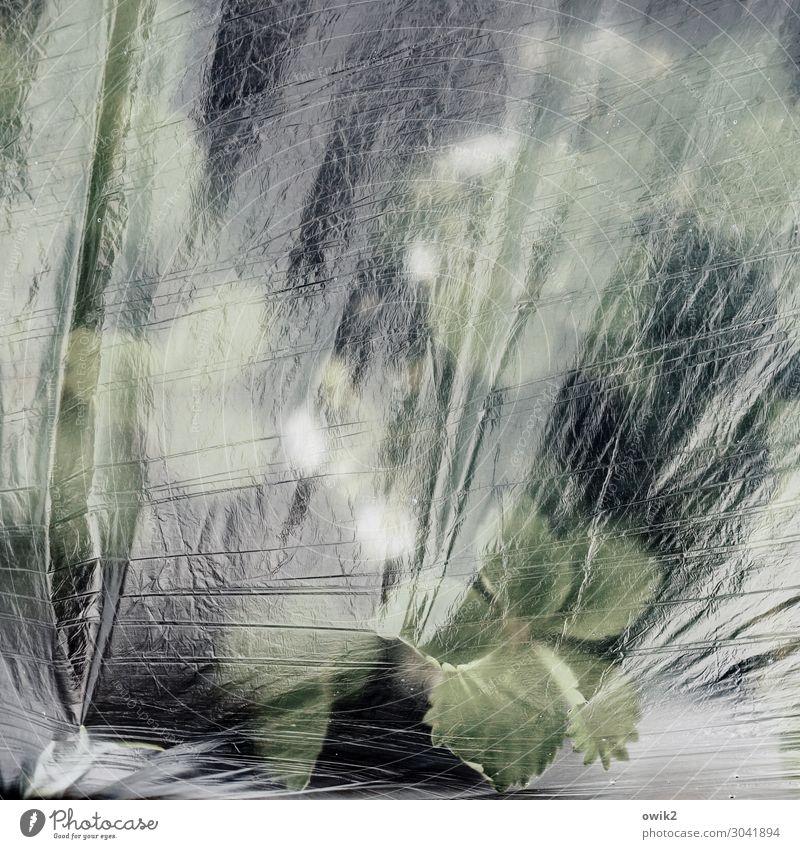 Frostschutzmittel Pflanze Frühling schlechtes Wetter Eis Blatt Erdbeerblüte Beet Garten Folie Folienbeet einpacken Kunststoff glänzend Schutz Sicherheit