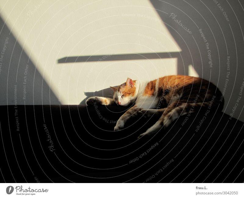 Kater namens Kater Möbel Lampe Tier Haustier Katze 1 schlafen träumen Farbfoto Innenaufnahme Textfreiraum oben Textfreiraum unten Tag Tierporträt
