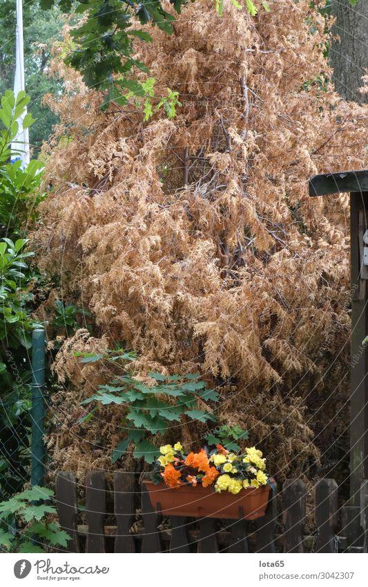 dry Natur Klimawandel Pflanze Baum Sträucher Garten dehydrieren trocken Wärme Farbfoto Außenaufnahme Tag