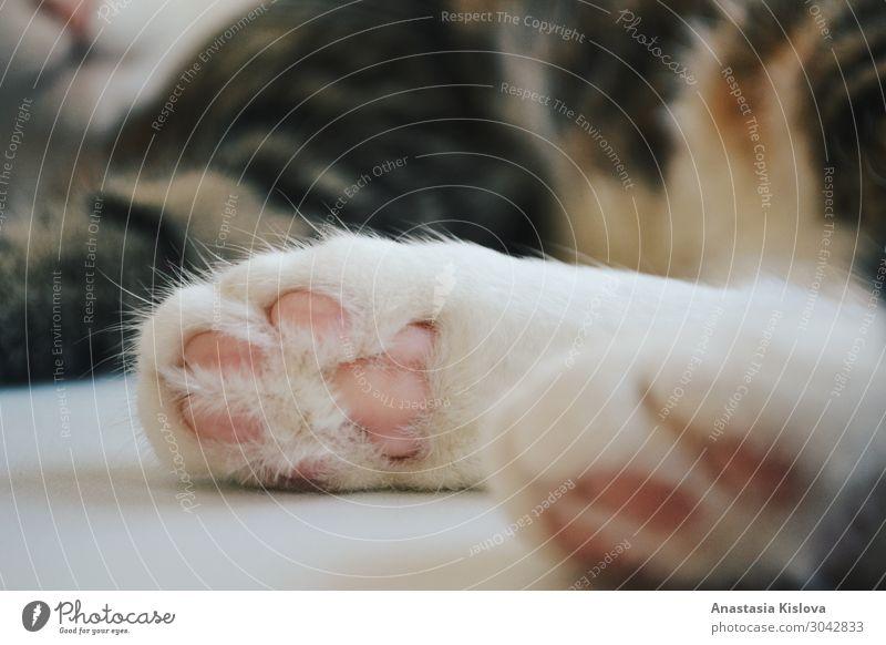 Katzenpfoten in Nahaufnahme Tier Haustier Pfote 1 Kunststoff Stimmung Fröhlichkeit Zufriedenheit Geborgenheit Tierliebe Gelassenheit ästhetisch Glück Leben