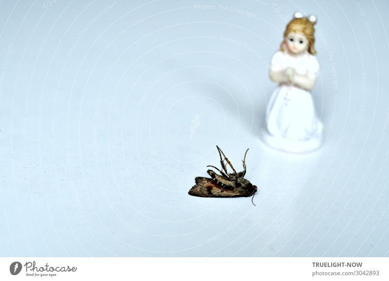 Spiritual Care Totes Tier Schmetterling Dekoration & Verzierung Kreuz Engel beobachten Traurigkeit braun silber weiß Gefühle Vertrauen Liebe Mitgefühl Güte