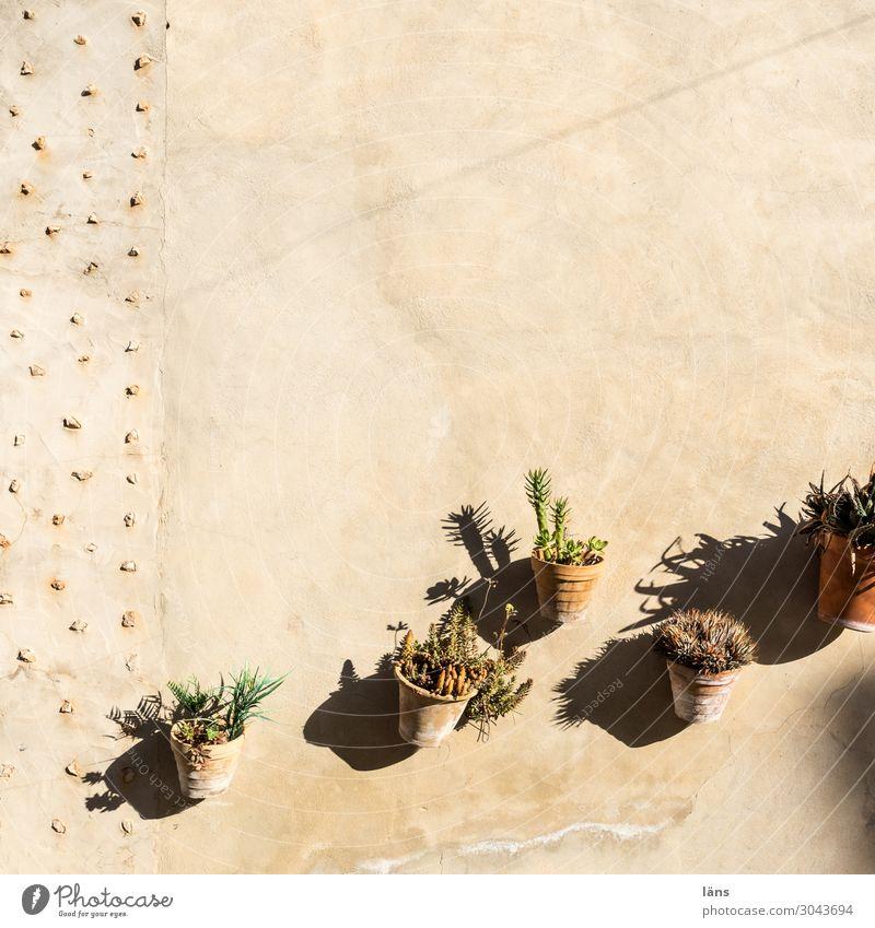 Wachstum Blumentöpfe sukkulente Pflanze Wand wachsen aufstrebend vertikale Strukturen aufwärts