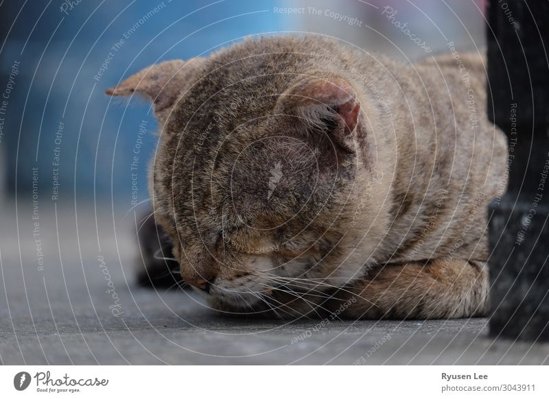 süße Katze schläft Tiergesicht 1 schlafen Einsamkeit Stadt Leben Erholung Farbfoto Außenaufnahme Menschenleer Abend Licht Starke Tiefenschärfe Tierporträt