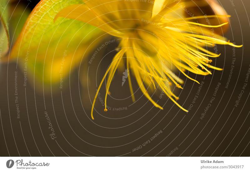 Johanniskraut schön Alternativmedizin Wellness harmonisch Wohlgefühl Zufriedenheit Erholung ruhig Meditation Spa Muttertag Geburtstag Trauerfeier Beerdigung