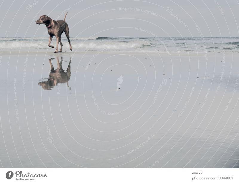 Doppelgänger Freizeit & Hobby Ferien & Urlaub & Reisen Ausflug Natur Landschaft Sand Wasser Wolkenloser Himmel Horizont Schönes Wetter Wellen Küste Ostsee Hund