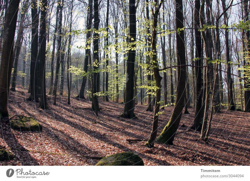 Erholung im Wald Ferien & Urlaub & Reisen Umwelt Natur Landschaft Pflanze Himmel Frühling Schönes Wetter Baum Stein Holz Wachstum ästhetisch natürlich braun