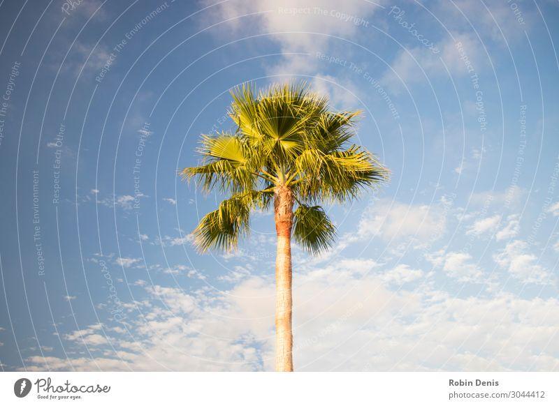 Himmel Ferien & Urlaub & Reisen Natur Sommer Pflanze blau grün Sonne Baum Wolken Blatt Strand Wärme gelb Umwelt Küste