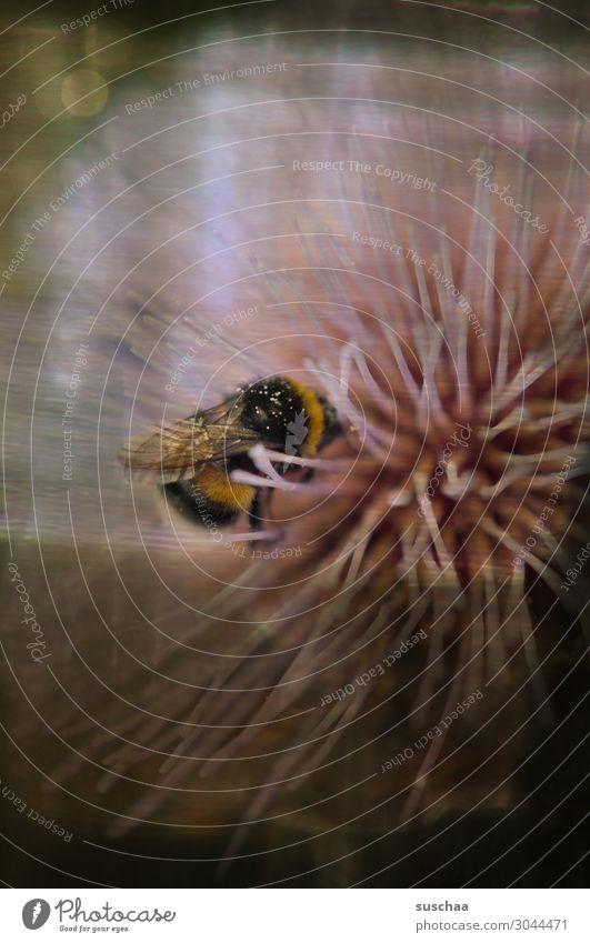 bienchen und blümchen Natur Blume Biene Duft dunkel Pflanze schön Wellness Gesundheit Seele Meditation Romantik Traurigkeit Retro-optik Honig fleißig