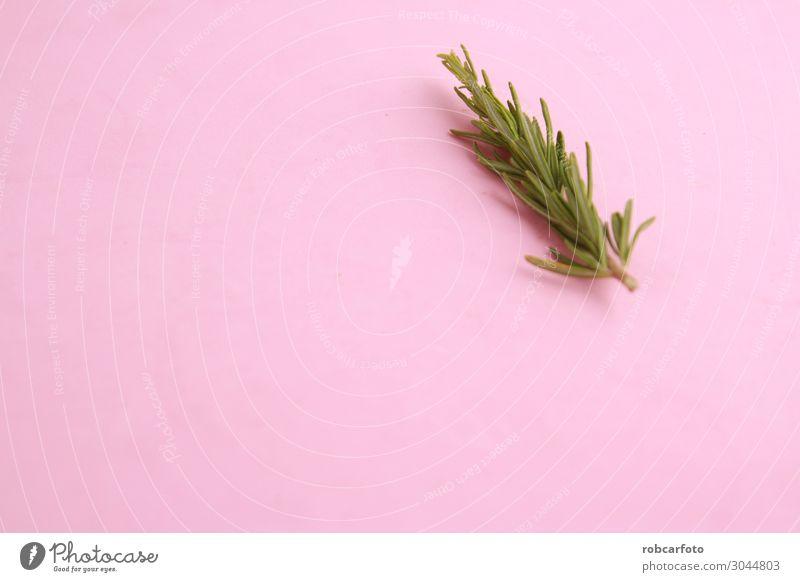 Rosmarin Kräuter & Gewürze schön Küche Menschengruppe Natur Pflanze Baum Blatt Blumenstrauß glänzend frisch natürlich grün weiß Tradition Hintergrund vereinzelt