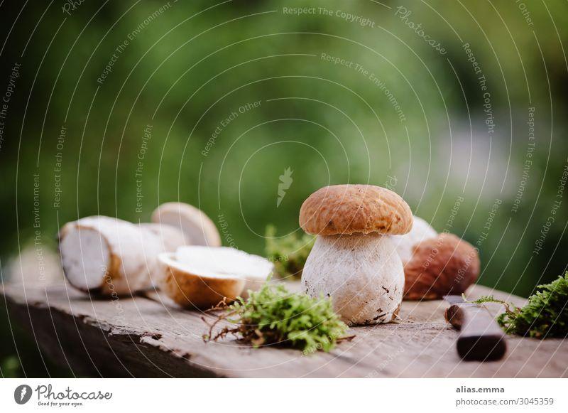 Frisch gesammelte Steinpilze auf einem Holzbrett Lebensmittel Pilz Ernährung Vegetarische Ernährung Natur Sommer Herbst Wald Dickröhrling natürlich Sammlung